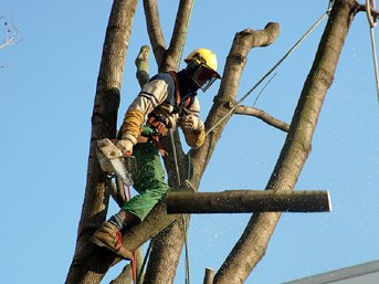 Tree Service in Arlington Texas